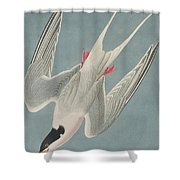 Roseate Tern Shower Curtain