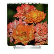 Pink And Orange Roses Shower Curtain