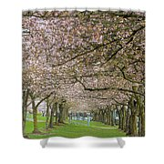 Rows Of Cherry Blossom Trees In Spring Shower Curtain