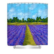 Rows Of Lavender In Provence Shower Curtain