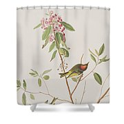Ruby Crowned Wren Shower Curtain