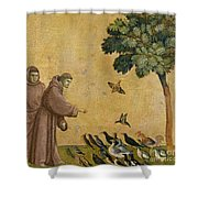 Saint Francis Of Assisi Preaching To The Birds Shower Curtain