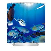 Saipan Marine Life Shower Curtain