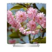 Sakura Flowers Shower Curtain