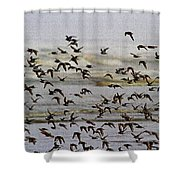 Sand Pipers In Flight Shower Curtain