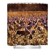 Sandhills In The Corn Shower Curtain