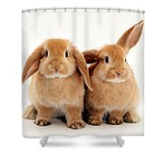 Sandy Lop Rabbits Shower Curtain