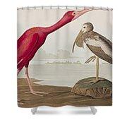 Scarlet Ibis Shower Curtain