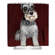 Schnauzer Portrait Shower Curtain