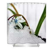 Scilla On Snow Shower Curtain