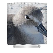 Sea Birds Sanibel Island Shower Curtain