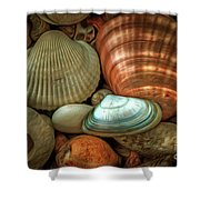 Sea Pebbles With Shells Shower Curtain