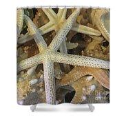 Starfish Treasure Shower Curtain