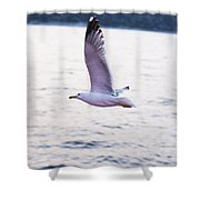 Seagulls Flying Shower Curtain