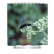 Search Shower Curtain