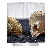 Seashells On Black Sand Shower Curtain