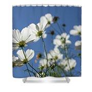 Sensation Cosmos Bipinnatus White Cosmos Standing Up Towerd Sk Shower Curtain