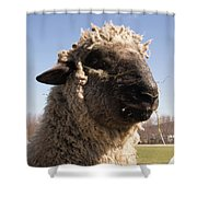 Sheep Face Shower Curtain