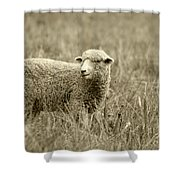 Sheep In A Meadow Shower Curtain
