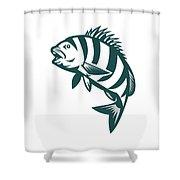 Sheepshead Fish Jumping Isolated Retro Shower Curtain