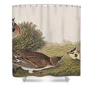 Shore Lark Shower Curtain