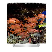 Shoulderbar Soldierfish Shower Curtain