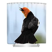 Showing Off Shower Curtain