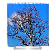 Silver And Blue Shower Curtain