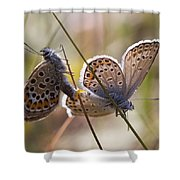 Silver-studded Blue Butterflies Shower Curtain