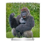 1- Silverback Western Lowland Gorilla  Shower Curtain