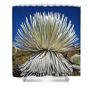 Silversword Plant Shower Curtain
