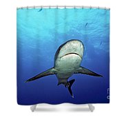 Silvertip Shark Shower Curtain