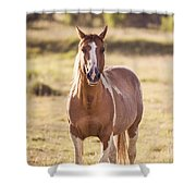 Single Horse Shower Curtain