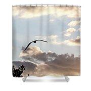 Jbhartgallery Shower Curtain