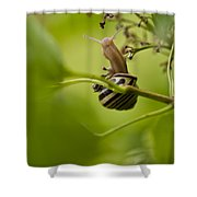 Snail Stretching Shower Curtain