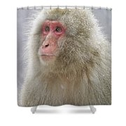 Snow-dusted Monkey Shower Curtain