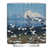 Snow Geese In Skagit Valley Shower Curtain
