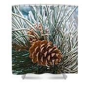 Snowy Pine Cones Shower Curtain