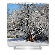 Snowy Tree Shower Curtain