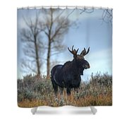 Son Of A King Shower Curtain