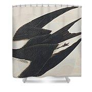 Sooty Tern Shower Curtain