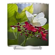 Southern White Butterfly  Shower Curtain