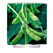 Soybeans Shower Curtain
