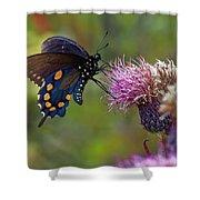 Spicebush Swallowtail On Bull Thistle Shower Curtain