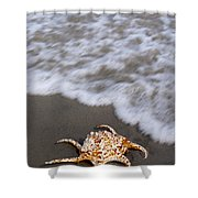 Spider Conch Shell Shower Curtain