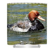 Splash Time Shower Curtain