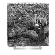 Sprawling Live Oak Shower Curtain