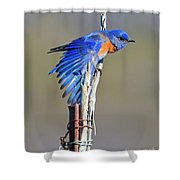 Spread The Wings Shower Curtain