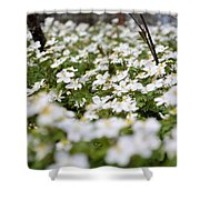 Spring Blossoms Shower Curtain