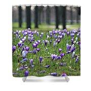 Spring Flowering Crocuses Shower Curtain